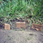 Insect graves :)